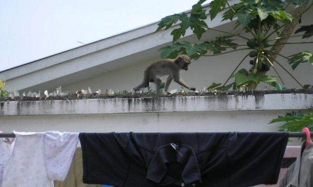 Hoe overleef je een verblijf in een kampung?
