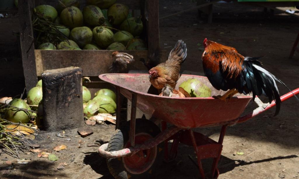 Hoe overleg je een kampung kampong Indonesië Maleisië Eating Habits (5)