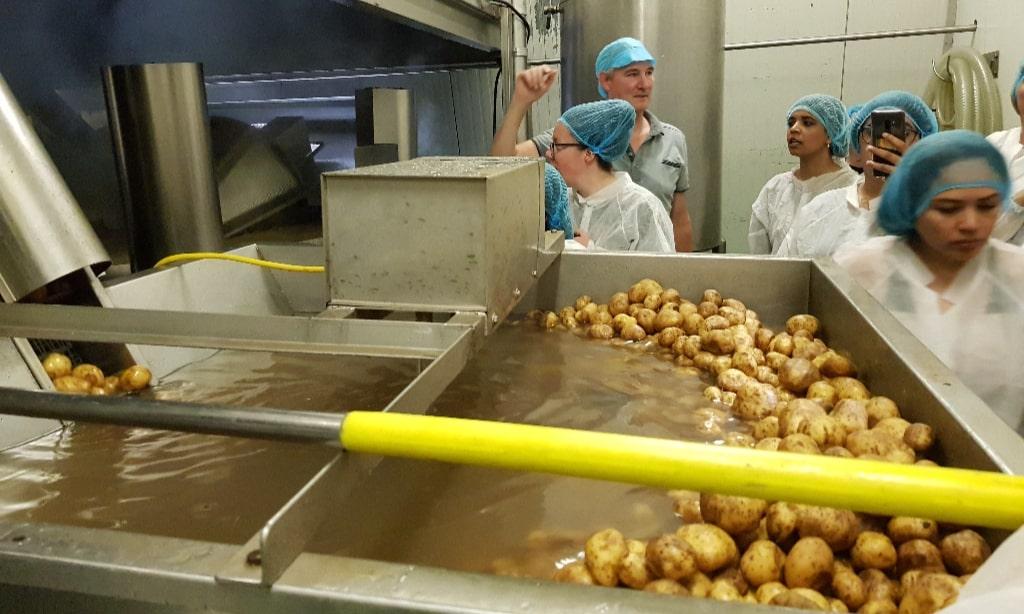 Boerderij Chips aardappelen worden gewassen Eating Habits