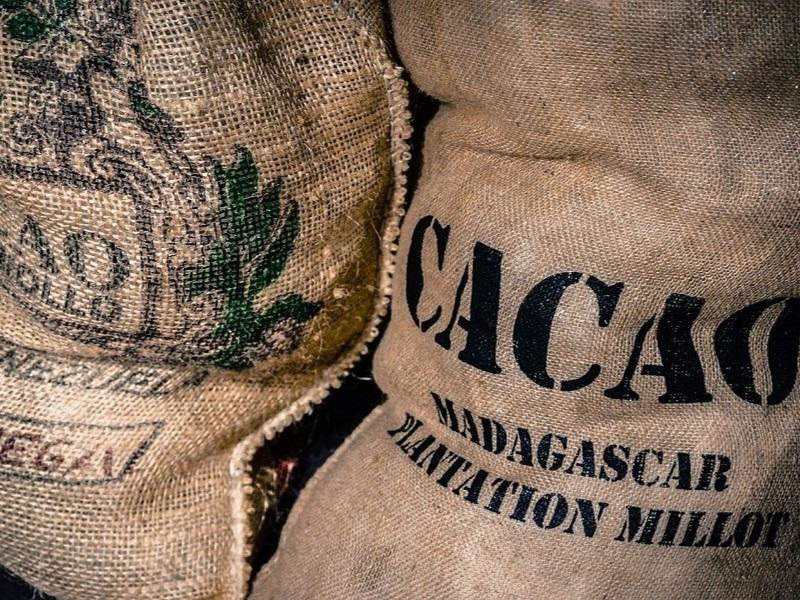 cacaobonen in zakken - hoe wordt chocolade gemaakt - Eating Habits
